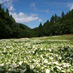 7/16(日)17:00 祇園祭 御杖神社 演奏