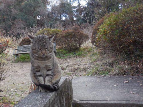長岳寺「猫」寺