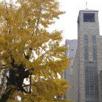 太融寺「大銀杏」樹齢300年