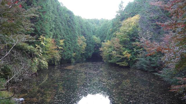 白河の龍山池